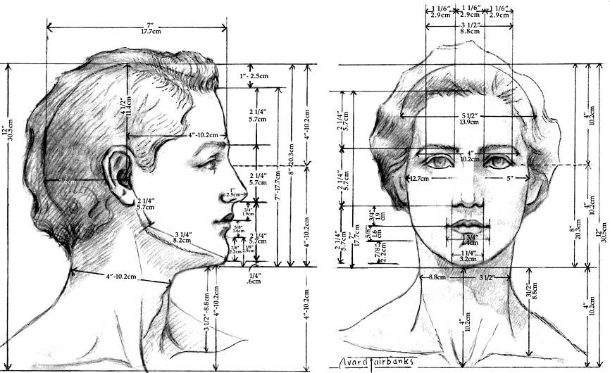 Female Head proportions.jpg