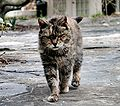 Feral barn cat.jpg