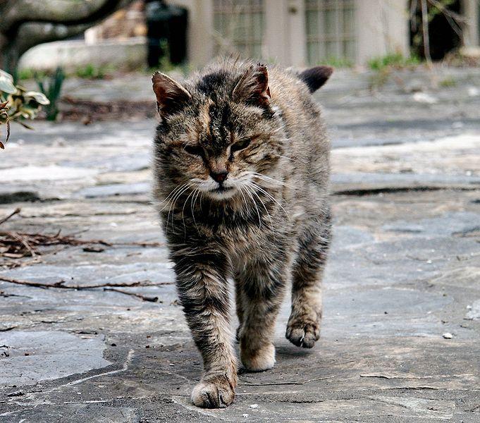 Rabies In Cats Uk
