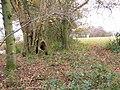 Field corner, Wildhern - geograph.org.uk - 1069529.jpg