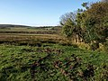 Field near Blackaton - geograph.org.uk - 1589087.jpg