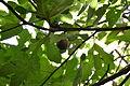Figs 17.JPG