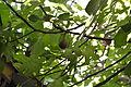 Figs 19.JPG