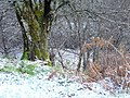 First snow, Blackwater River - geograph.org.uk - 619794.jpg