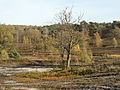 Fischbeker-Heide-Baum.jpg
