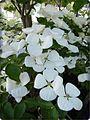 Fleur - panoramio (1).jpg