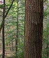 Flickr - Nicholas T - Henry's Woods (2).jpg