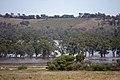 Flood waters on the Murrumbidgee flood plains in Gobbagombalin, viewed from Rainbow Drive in Estella (5).jpg