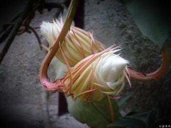 Flora (159).jpg