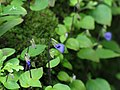 Flower 8367.jpg