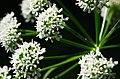 Flowers (9231910641).jpg