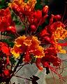 Flowers on Fire (6056669895).jpg