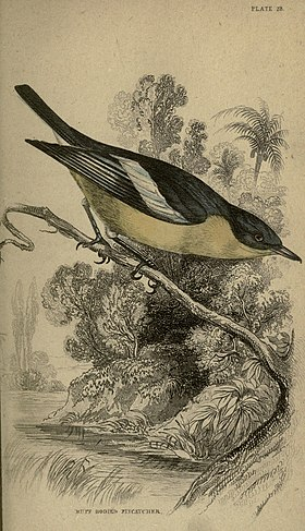 Flycatchers (10159019985).jpg