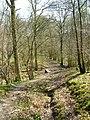 Footbridge in Capite Wood, in Wiston, West Sussex.jpg