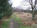 Footpath, Cannock Chase - geograph.org.uk - 367709.jpg
