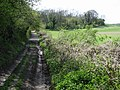Footpath and bridleway, part of the Stour Valley Walk - geograph.org.uk - 785066.jpg