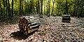 Forêt D Othe (255869975).jpeg