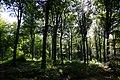 Forêt de Stambruges 20.jpg
