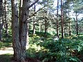 Forest Path - geograph.org.uk - 542325.jpg