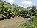 Forest Vegetation.jpg