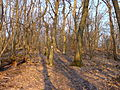 Forest path to Fekete-fej 02.JPG