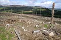Forestry near An Torr - geograph.org.uk - 227500.jpg