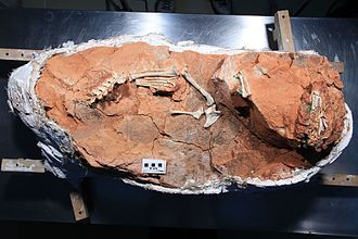 Buriolestes - Block containing the holotype fossil