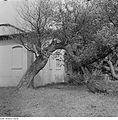 Fotothek df ps 0001137 Bäume.jpg