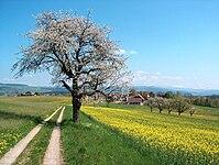 Frühlingslandschft Aaretal Schweiz.jpg