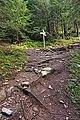 France - trail.jpg