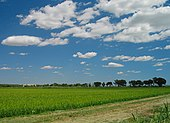 France rice field in camargue.jpg