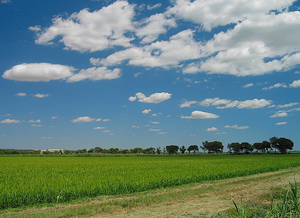 France rice field in camargue
