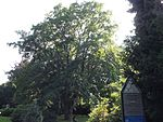 Friedhof-Lilienthalstraße-101.jpg