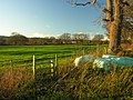 From stile and old tree looking towards East Farm, Crickheath - geograph.org.uk - 291622.jpg