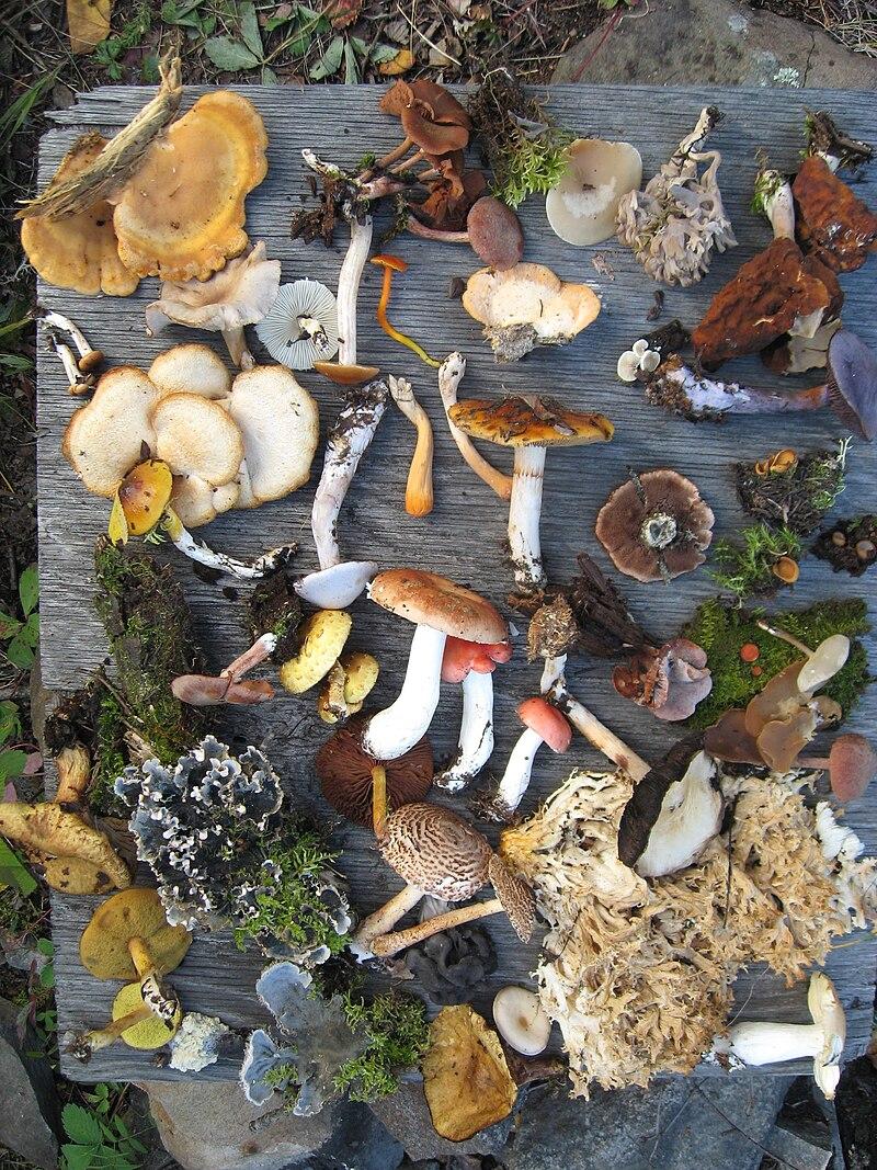 Fungi of Saskatchewan.JPG