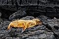 Galapagos (46541939855).jpg