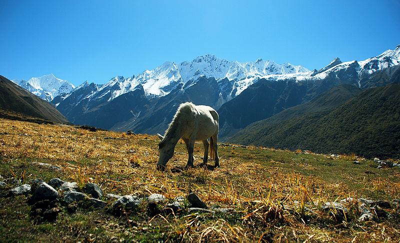 Ganchempo and range Kyanjin Gompa.jpg