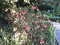 Gardenology.org-IMG 2016 hunt09oct.jpg