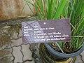 Gardenology.org-IMG 7587 qsbg11mar.jpg
