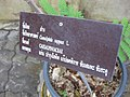 Gardenology.org-IMG 7772 qsbg11mar.jpg