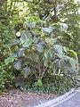 Gardenology.org-IMG 9284 rbgm10dec.jpg