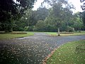 Gardens in Barking Park - geograph.org.uk - 573359.jpg