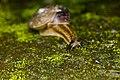 Gastropoda (34810683812).jpg