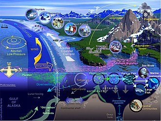 Marine life - General characteristics of a large marine ecosystem (Gulf of Alaska)