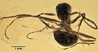 2004 in paleontology - Gerontoformica cretacica