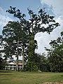 Ghana Aburi Botanical gardens (8).jpg