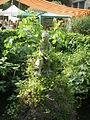 Giardino corsini, statua bambino con tartaruga 01.JPG