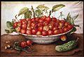 Giovanna garzoni, una ciotola di ciliegie, un cetriolo, una lucertola e tre niccioli, 02.jpg