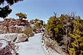 Grand Canyon North Rim09.jpg