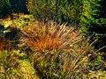 Grass - panoramio (6).jpg